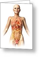 Female Body With Bone Skeleton Greeting Card