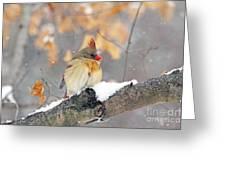Female Cardinal In Snow Greeting Card