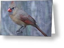 Female Cardinal Greeting Card by John Kunze