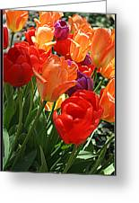 Festival Of Tulips Greeting Card