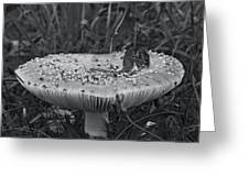 Field Mouse On Mushroom Cap  Greeting Card