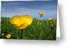 Field Of Buttercups Greeting Card
