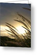 Field Of Dreams Greeting Card by Laura Fasulo