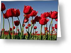 Field Of Red Tulips Greeting Card