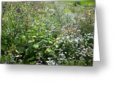 Field Of Wild Flowers Greeting Card