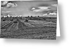 Fields Of Summer Greeting Card