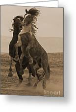 Fighting Wild Stallions Greeting Card