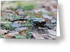 Fire Salamander Fog Droplets Greeting Card