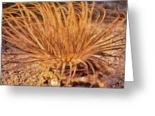 Firework Anemone Greeting Card