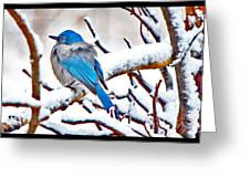 First December Snow Greeting Card