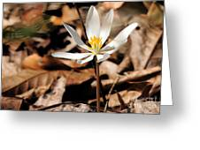 First Sign Of Spring 2 Greeting Card