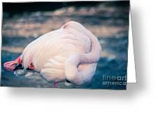 Flamingo 2b Greeting Card