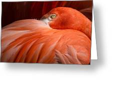 Flamingos Greeting Card