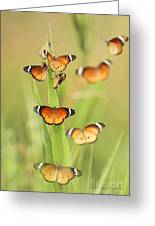 Flock Of Plain Tiger Danaus Chrysippus Greeting Card by Alon Meir