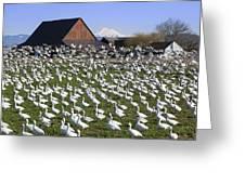 Flocks Of Snow Geese Greeting Card