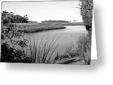Florida Au Natural Bw Greeting Card