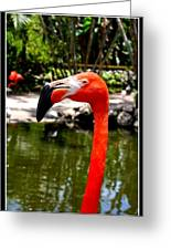 Florida Pink Flamingo Greeting Card