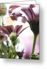 Flower Background Greeting Card