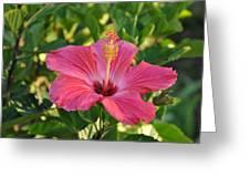 Flower Greeting Card