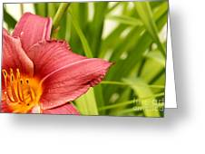Flower Lily Background Greeting Card