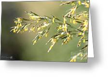 Flowering Brome Grass Greeting Card