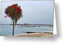 Flowers Along The Seafront Greeting Card