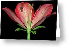 Flower's Reproductive Structures, Artwork Greeting Card