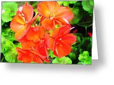 Flowers Greeting Card by Sonya Ragyovska
