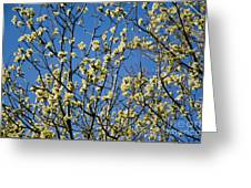 Fluffy Catkins At At Tree Against Blue Sky Greeting Card