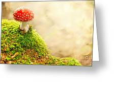 Fly Agaric Greeting Card by Stefan Holm