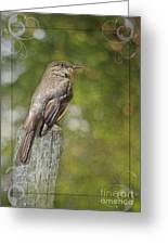 Flycatcher In Southern Missouri Greeting Card