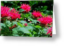 Flying Bee With Bee Balm Flowers Greeting Card