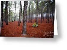 Foggy Landscape Greeting Card