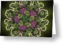 Foot-and-mouth Disease Virus Greeting Card by Science Photo Library
