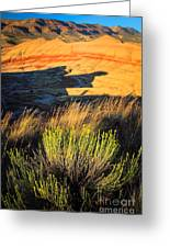 Fossil Beds And Grass Greeting Card