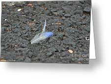 Found Feather Greeting Card