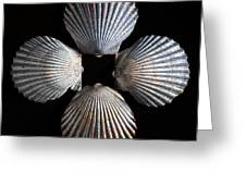 Four Shells Greeting Card