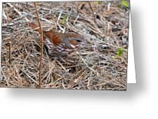 Fox Sparrow 2 Greeting Card