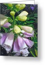 Foxglove In Sunlight-2 Greeting Card