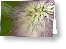 Foxtail Greeting Card