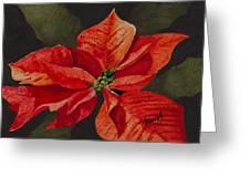 Franci's Poinsettia Greeting Card