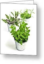 Fresh Herbs In Pots Greeting Card