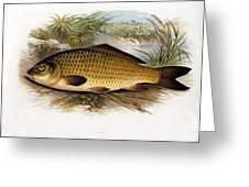 Fresh Water Fish Greeting Card