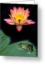 Frog And Waterlily Greeting Card