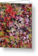 Frost On Autumn Tundra Greeting Card