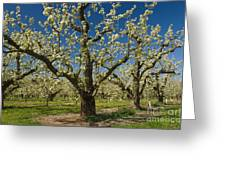 Fruit Orchard Greeting Card