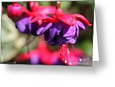 Fuchsia Named Dark Eyes Greeting Card