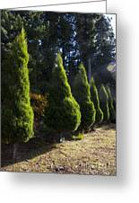 Funeral Cypress Trees Greeting Card