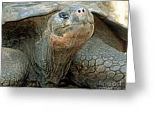 Galapagos Giant Tortoise Greeting Card
