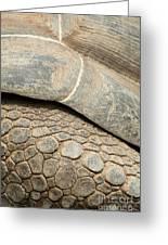 Galapagos Turtle Greeting Card